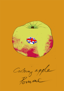 Bramley apple large format Giclee print